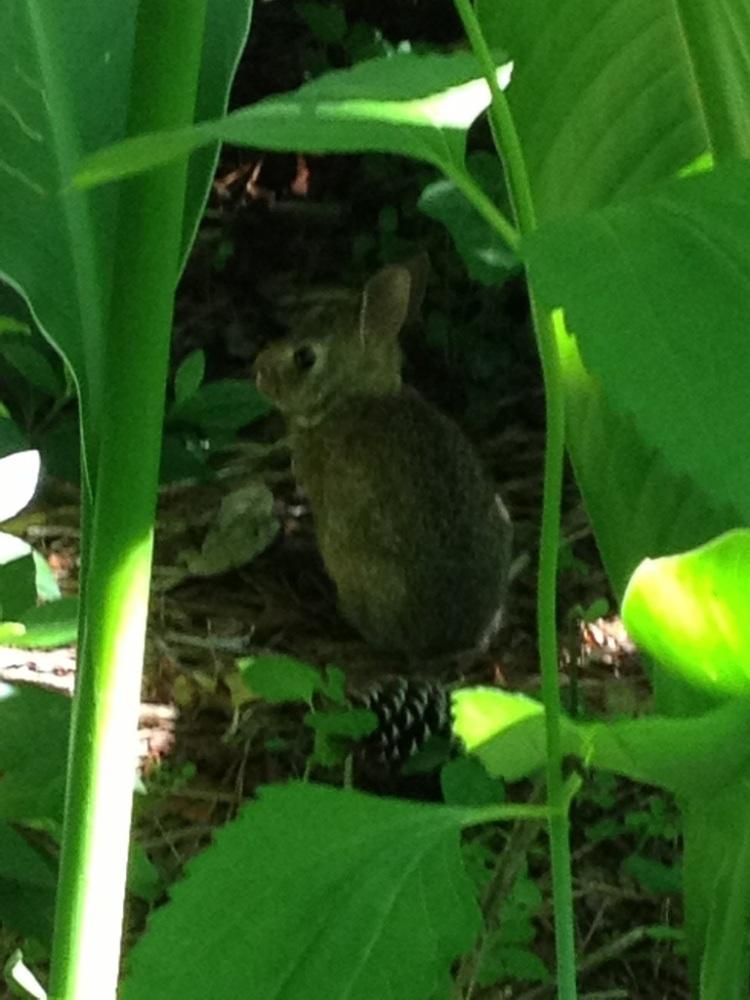 Rabbits, voles, and moths... (1/3)