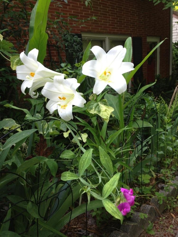 A Sunday morning walk through the garden. (3/6)