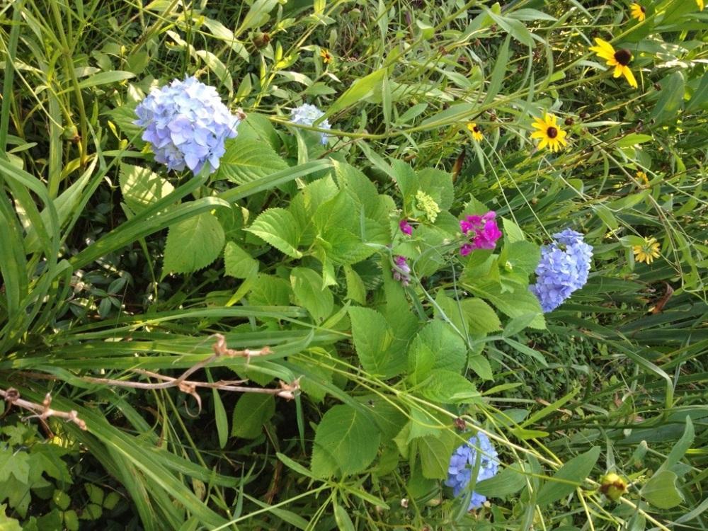 A Sunday morning walk through the garden. (4/6)