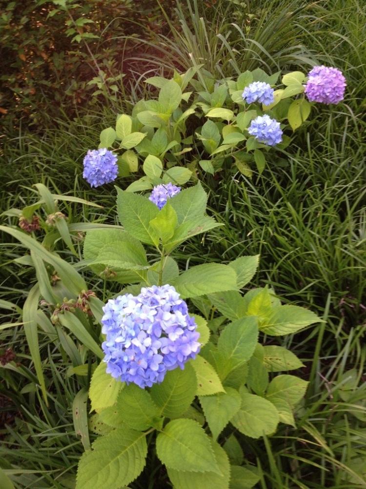 A Sunday morning walk through the garden. (5/6)